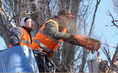 Safety Tips and Techniques For Successful Tree Felling