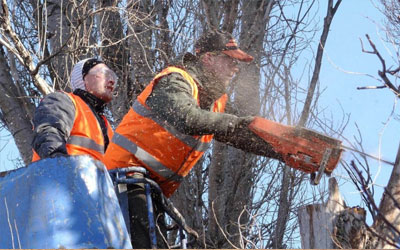 Safety-Tips-and-Techniques-For-Successful-Tree-Felling-feat