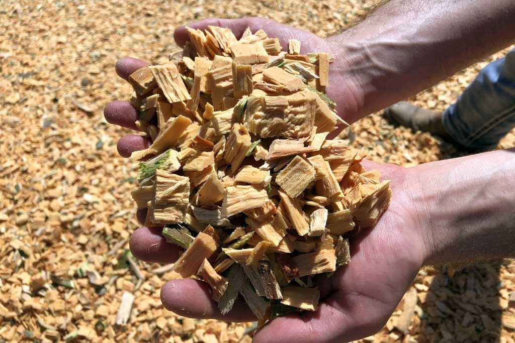 Man holding wood chips
